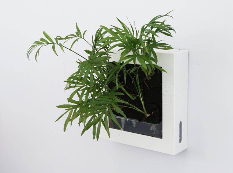 绿色水培植物 室内墙上饰品