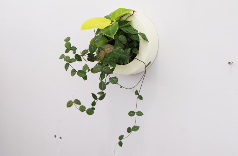 水培绿植 墙上 室内绿色植物装饰物
